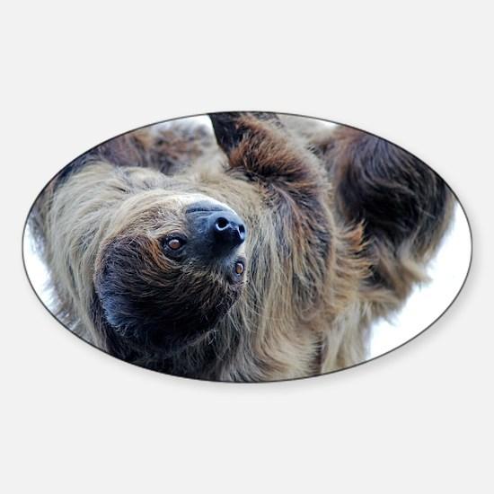 Sloth Large Print Sticker (Oval)