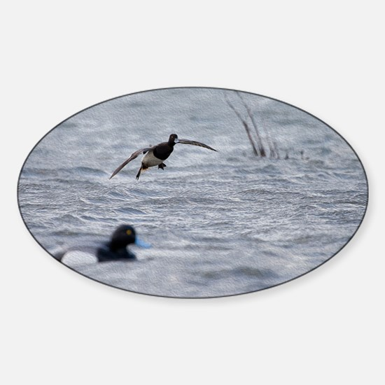 Flying Bluebill Duck Sticker (Oval)