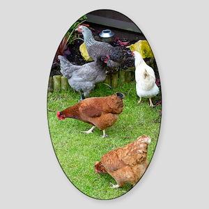 Hen Sticker (Oval)