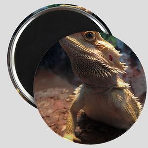 Bearded Dragon Magnet