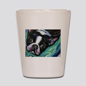 Boston Terrier eyes Shot Glass