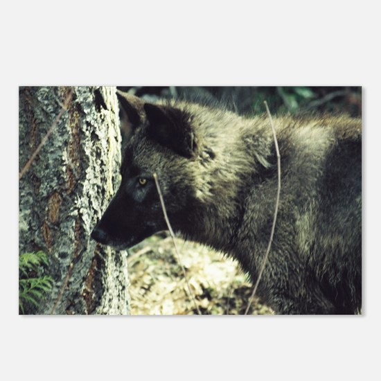 """Young  Black  Wolf"" Postcards (Package of 8)"