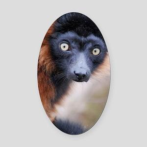 Red Ruffed Lemur 3x5 Rug Oval Car Magnet