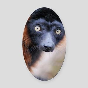 Red Ruffed Lemur Panel Print Oval Car Magnet