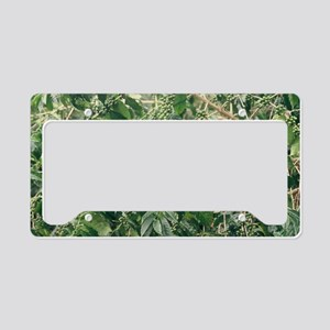 """""""Green  Coffee  Beans"""" License Plate Holder"""