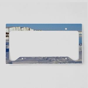 Penguin Place License Plate Holder