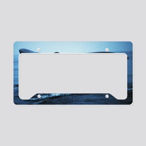Fluke License Plate Holder