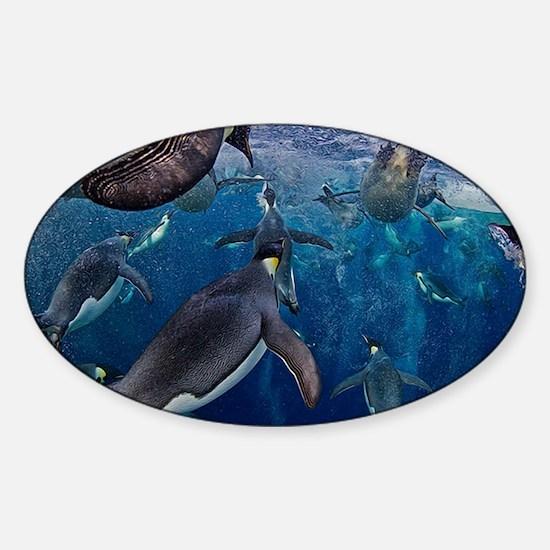 Emperor Penguins Rising Sticker (Oval)