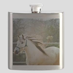 Paso Fino  Flask