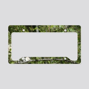 """""""Watching  You"""" License Plate Holder"""