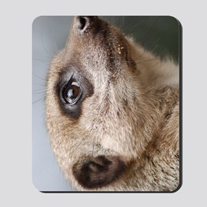 Meerkat Nexus Phone Case Mousepad