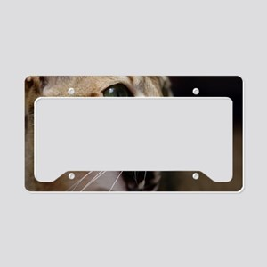 Aby Singapura License Plate Holder