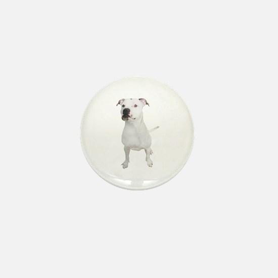 Cool Pittie Mini Button