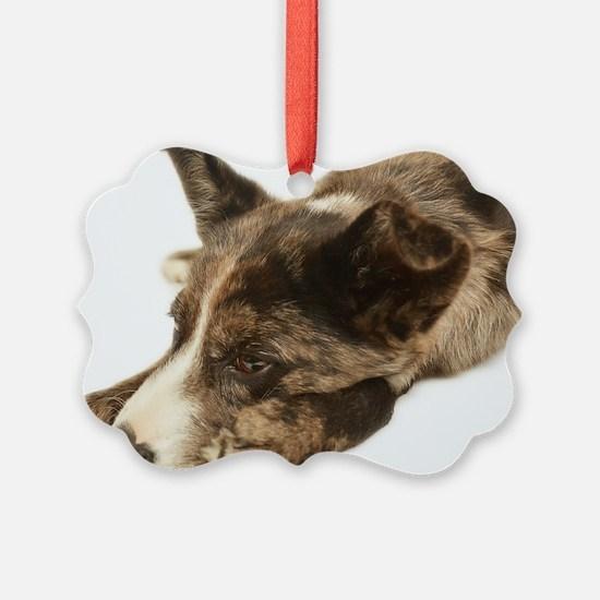 Adorable Rescue Australian Shephe Ornament
