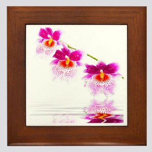 Three Oncidium Pink and White Orchids Framed Tile