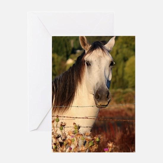 The White Stallion Greeting Card