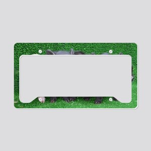 4 micro pigs in a row License Plate Holder
