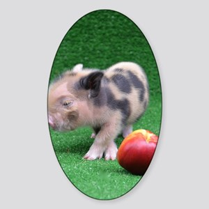 Baby micro pig with Peach Sticker (Oval)