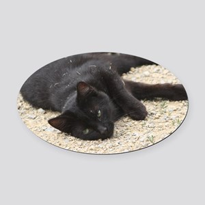 cat Oval Car Magnet