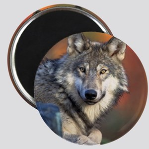 Wolf Wolves Lovers Magnet