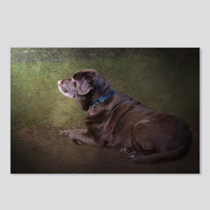 Chocolate Labrador Postcards (Package of 8)