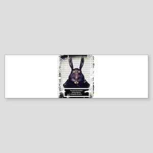 Evil Easter Bunny Rabbit SOLO Bumper Sticker