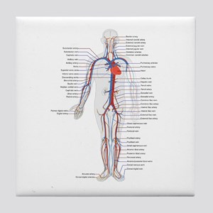 Circulatory System Tile Coaster