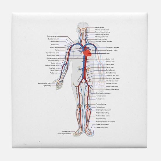 Circulatory System Tile Coaster