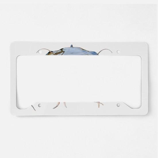 Bigmouth Flathead catfish License Plate Holder