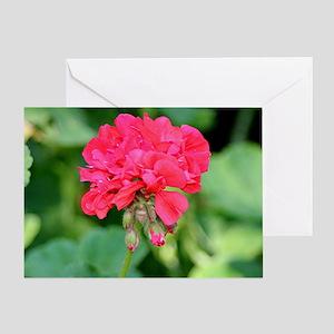 Geranium flower (red) in bloom Greeting Card