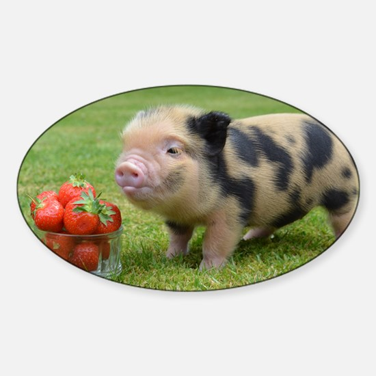 Micro pig with strawberries Sticker (Oval)