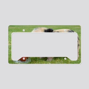 Micro pig with strawberries License Plate Holder