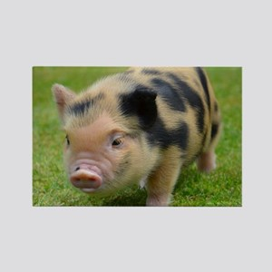 Little Spotty micro pig Rectangle Magnet