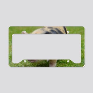 Little Spotty micro pig License Plate Holder