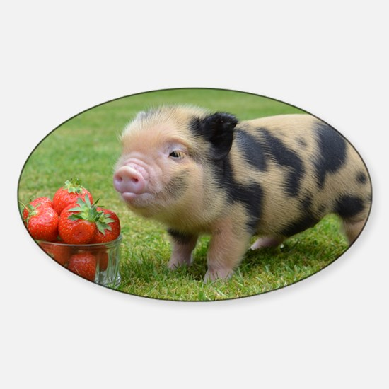 Little micro pig with strawberries Sticker (Oval)
