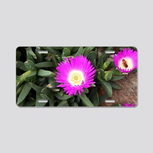 Pigface flowers in bloom Aluminum License Plate