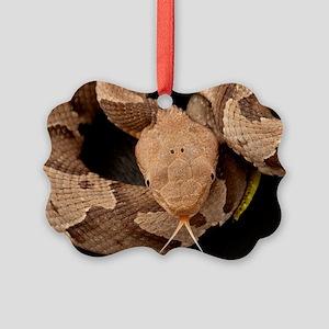 Copperhead Snake Picture Ornament