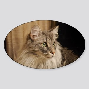 Norwegian Forest Cat Sticker (Oval)