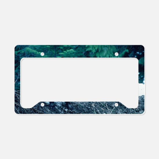 """Beautiful  Wolf"" License Plate Holder"