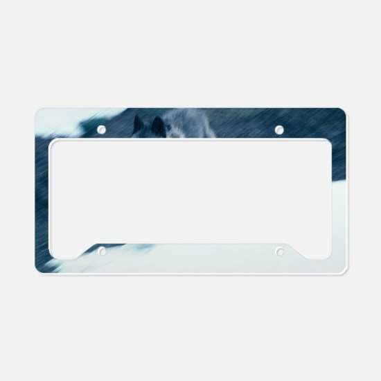 """Ghostly  Look  Of  The  Blac License Plate Holder"