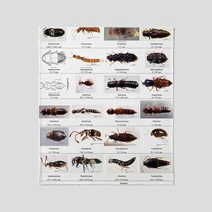 Staphylinidae Poster Throw Blanket