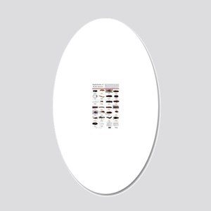 Staphylinidae Poster 20x12 Oval Wall Decal