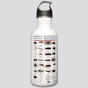 Staphylinidae Poster Stainless Water Bottle 1.0L