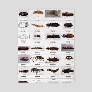 Staphylinidae Poster Twin Duvet
