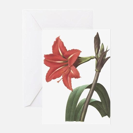 Redoute Amaryllis Greeting Card