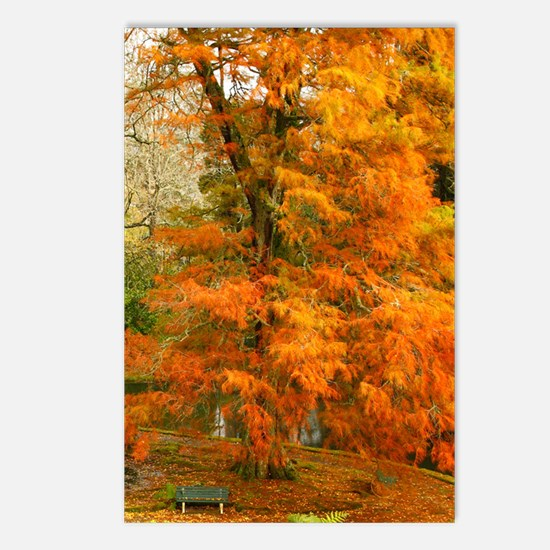 Willow in Autumn colors Postcards (Package of 8)