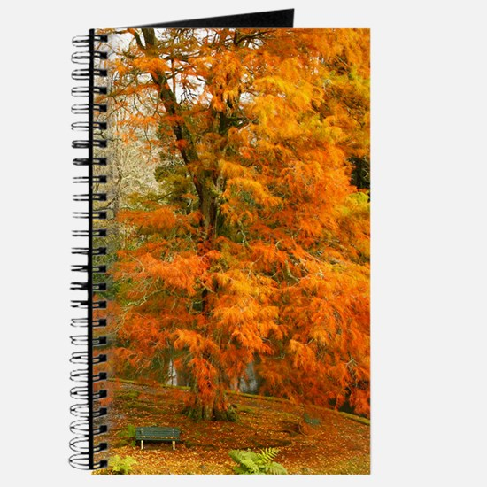 Willow in Autumn colors Journal