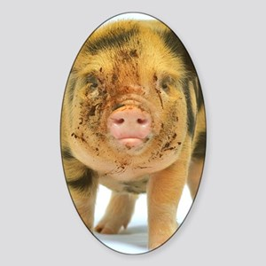 Messy micro pig Sticker (Oval)