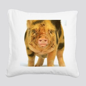 Micro pig looking messy Square Canvas Pillow