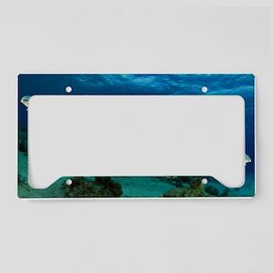 Sea Turtle Soar License Plate Holder
